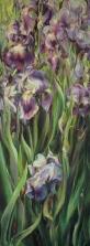 5. Blue Iris