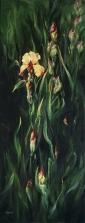6. Golden Iris