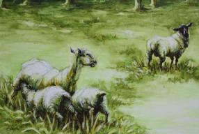 41. Sheep-iii
