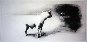 7. The White Bull of Ulster